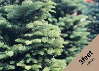 【予約販売】オレゴン産モミの木Oregon Abies Firma / 3feet / 100cm