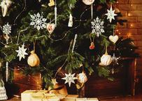 オレゴン産モミの木Oregon Abies Firma / 100cm(3feet)【23区限定商品】