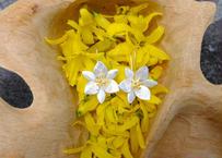 シルバーピアス(タイの花)2525_0302011