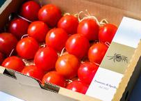 【おうちレストランセット】薩摩甘照×イタリア・スペッロ産オリーブオイルFrantoio di Spello