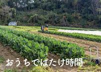 7/26(日)おまかせ野菜BOX「おうちで、はたけ時間!」自宅で収穫体験