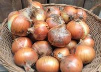 農薬不使用、知多半島のタマネギ(5kg)