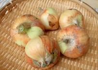 甘くてとろとろ!農薬不使用、知多半島の新タマネギ(4kg)