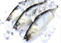 【釣日和×FBLコラボモデル】 魚皮ジョインテッドクロー178(コノシロ)