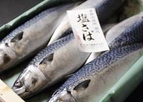 焼津塩鯖 せのうみ 5尾(送料込)