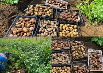 6種ジャガイモ食べ比べセット2k