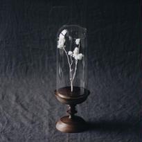 Glass Dome  [ walnut ]