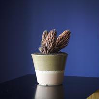 ハオルチア(品種不明) × AMETSUCHI pot (M)