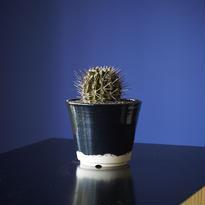 カラギボッサ × AMETSUCHI pot (S)