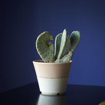 バシラリス × AMETSUCHI pot (M)