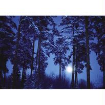 Full Moon  :  Magic Forests - 29625