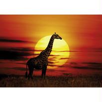 Sunny Giraffe  :  Sunlight - 29688