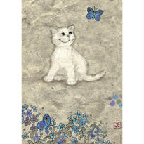 White Kitty : Jane Crowther - 29626