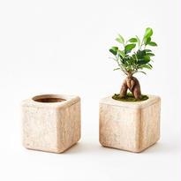 [chii]植物の美しさを引き立てるプランター 5号