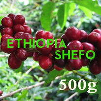 【SPECIALTY COFFEE】500g Ethiopia Yirgachefe Shefo 1.600-2.000m Fully Washed / エチオピア イルガチェフ シェフォ F.W.