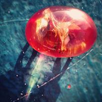 Vintage Obi-dome 赤いグミの実のような