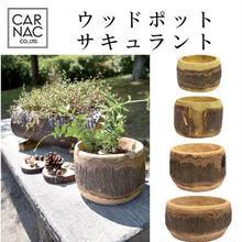天然木をくり抜いた木製ポット ウッドポットサキュラントMサイズ