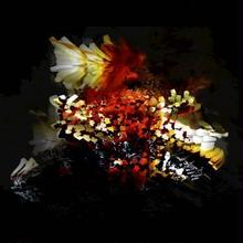 """12""""  Bogus Order a.k.a.Coldcut /  The Bullnose Step EP         <BreakBeats / steps>"""
