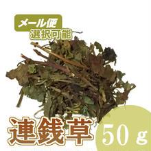 連銭草(かきどおし) 50g