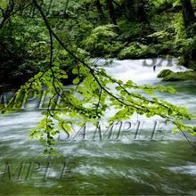 奥入瀬渓流6 size:L