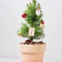 2018 X'mas tree