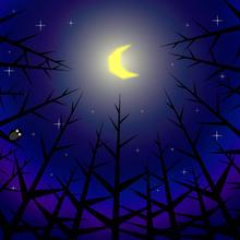 A4イラスト004 森の月夜