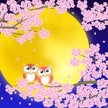 A4イラスト008 静月桜(しづきさくら)