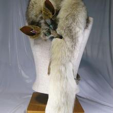 白狐のショルダーアクセ