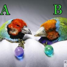 小鳥のピアス