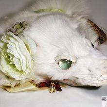 けものヘッドドレス(白)