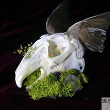 羽根ウサギの頭骨ヘッドドレス