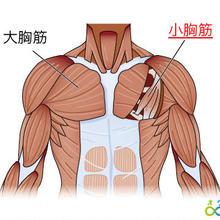 筋肉反射マニュアル