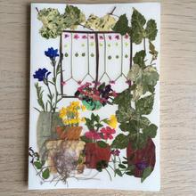 メッセージカード 窓(2つ折り/封筒付)