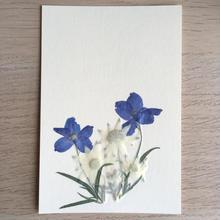 夏のコントラスト(Post Card)