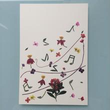 メロディS01 (Postcard)