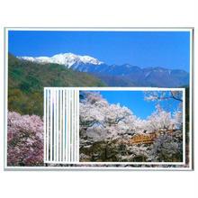 ポストカード13枚組「桜 さくら 高遠」