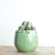 Euphorbia horrida  no.2 2018.01.12