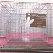 コンフォート60  限定ピンク