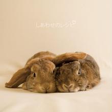 【CD】that×れるりり「しあわせのレシピ」