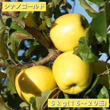 【送料無料】「シナノゴールド」5kg(16~20玉)【青森県産りんご:家庭用】