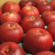 【送料無料】「紅玉」5kg(23~25玉)【青森県産りんご】