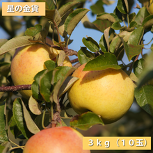 【送料無料】「星の金貨」3kg(約10玉)【青森県産りんご:家庭用】