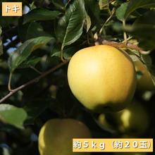【送料無料】「トキ」5kg(約10玉)【青森県産りんご:家庭用】