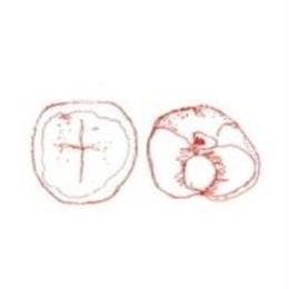 桃と苺 Peche&Fraise 100g