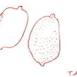 Lemon&Kiwi 50g レモン&キウィ