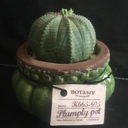 ユーフォルビア オベサ Euphorbia obesa+PLUMPLY POT