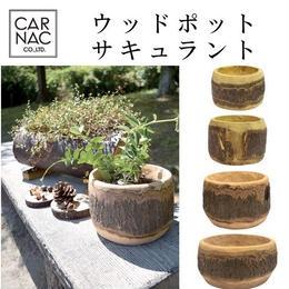 天然木をくり抜いた木製ポット ウッドポットサキュラントLサイズ
