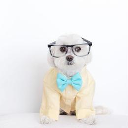 Toby Little Dude La La Land Dog Shirt