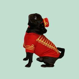 Empire Dog Sweatshirt  RED
