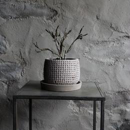 ユーフォルビア プラティクラダ indoor plants S size 現品